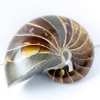 オウムガイ 化石 原石 Gemstone オウム貝 fossil 天...--36700