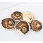 巻き貝 化石 原石 Gemstone サンゴ fossil 貝