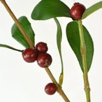 【FIAN造花】スノーベリーBR    実付き フェイクグリーン 造花 枯れない ベリー アレンジ 花束