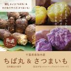 産直 里芋「ちば丸(LM)」&選べる「サツマイモ(ワケあり)」計5kg