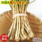 島らっきょう 沖縄産(生)500g