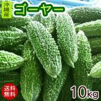 沖縄産 ゴーヤー 約10kg(40〜50本)(送料無料)(冷蔵発送)