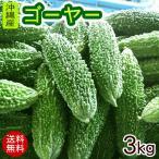 沖縄産 ゴーヤー 約3kg(10〜15本)(送料無料) [冷蔵発送]