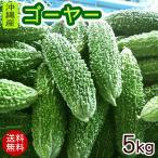 沖縄産 ゴーヤー 約5kg(20〜25本)(送料無料)(冷蔵発送)