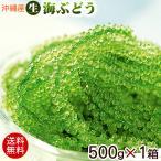 沖縄産 海ぶどう 生 500g×1箱 (送料無料)(常温発送)
