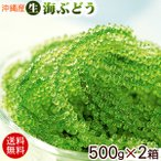沖縄産 海ぶどう 生 500g×2箱(1kg)(送料無料)(常温発送)