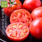 【送料無料】高知県産 徳谷トマト約700g【フルーツトマト 高知 トマト 送料無料 ギフト 贈答 プレゼント 内祝い 出産祝い】
