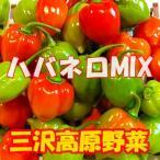 冷凍 ハバネロ 辛いもの好きの方にオススメ! 激辛トウガラシ 冷凍赤青MIXハバネロ 200g 三沢高原野菜