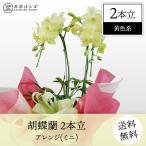 胡蝶蘭 コチョウラン 2本立・アレンジ 黄色系 ミニ /胡蝶蘭/こちょうらん/コチョウラン