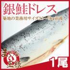 (サーモン 鮭 サケ) 銀鮭 ドレス (生 甘口)2.5〜3kg