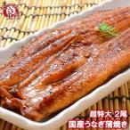 超特大 国産うなぎ蒲焼き 平均250g前後×2尾 タレ付き (国産 うなぎ ウナギ 鰻)