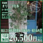 観葉植物 オリーブ オリーブの木 御祝 25000円 新築祝 開店祝 開業祝 引越祝
