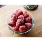 冷凍いちご (1kg) 国産 無添加 お子様のおやつやデザートに最適