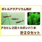 (ボトルアクアリウム向け)アカヒレ・水草セット 20組