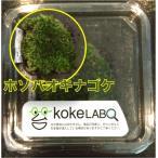【水草・モス・コケ】ホソバオキナゴケゴケ(コケラボ) 3カップ