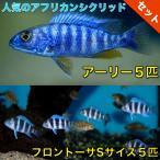【熱帯魚・アフリカンシクリッドセット】アーリー5匹(4cm前後)+フロントーサ5匹(3cm前後)