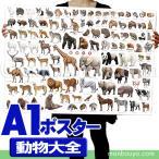 動物図鑑 子供 アートポスター インテリア 特大 A1サイズ お風呂 動物大全 ポスター