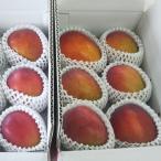 《訳あり》自宅用・格安 宮古島産 アップルマンゴー2kg(4〜6個入り)