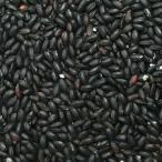 令和元年産 山梨県産 黒米 10kg