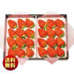 お歳暮 送料無料 冬ギフト 熊本県産 ゆうべに苺