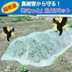 3個以上送料無料 鳥よけネット 2m×5m1枚 /鳥よけグッズ 効果 トマト 畑