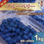 生ブルーベリー 1kg 有機栽培 ご家庭用 まろやかな甘さ 地域限定送料無料
