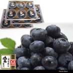 ブルーベリー 100g 18パック エコえひめゴールド認証 冷蔵便 国産 地域限定送料無料
