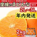 愛媛のまどんな (紅まどんな・紅マドンナ)2L〜3L 2kg 【御歳暮・贈答】【沖縄・北海道以外 送料無料】