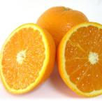 清見タンゴール 優 L 5kg  愛媛 三崎 完熟 清見オレンジ 樹上越冬 家庭用 一部地域送料無料
