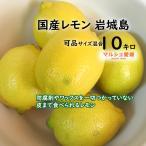 レモン 可品 10kg サイズ混合 風すれ色ムラ有 家庭用 愛媛県産 一部地域送料無料