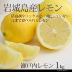レモン 整品 1kg 愛媛いわぎ島 国産 瀬戸内レモン 産地直送