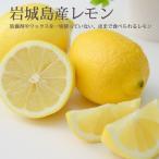 国産 レモン  秀品 10kg ハウスレモン ノーワックス 贈答用 愛媛