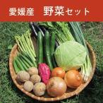 野菜セット 10種類 愛媛県産 レモンな生姜サイダー1本プレゼント