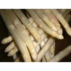 蘆筍 - フレッシュ ホワイトアスパラガス(フランス産) 約500g 1/24〜入荷予定