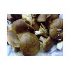 フレッシュのイタリア プーリア州特産 高級キノコ カルドンチェッロ茸 約500g