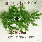 クリスマスリース 手作り 材料 花材 裏白モミの枝1本・生 クリスマスリース 玄関 おしゃれ