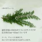 クリスマスリース 手作り 材料 ひむろ杉の枝(小)・生 ┃クリスマス材料 クリスマスリース 玄関 おしゃれ ギフト