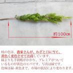 クリスマスリース 手作り クリスマスリース 玄関 おしゃれ 材料 ヒバの枝/1本約100cm・生