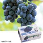 葡萄 ぶどう 山梨県産(JAふえふき一宮) 種無し巨峰 約800g(220_20梨)