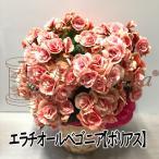 母の日エラチオールベゴニア 5号ボリアス【送料無料】ギフト 花鉢 2020/母の日/お祝い/お誕生日/各種ギフト/お彼岸/お供えに