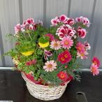 おまかせ季節のお花のフラワーバスケット【送料無料】鉢植え 花 ギフト 寄せ鉢 開業祝 / 開店祝 / 移転祝い / お誕生日 / 各種ギフト / お供えに