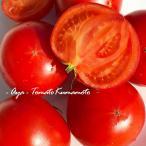 塩トマト「綾」 約1キロ 熊本産 高級 高糖度 特別なトマト