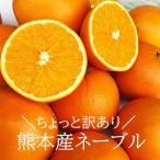 訳あり ネーブル 約10キロ 熊本産 ご家庭用 ネーブルオレンジ 国産