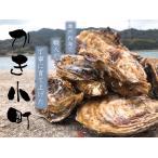 広島県産加熱用生牡蠣 殻付き牡蠣50個 産地直送 かき小町
