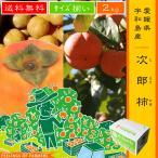【次郎柿 2kg】 愛媛県・宇和島産 サイズ揃い 送料無料