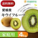 愛媛産 キウイフルーツ 4kg 家庭用 送料無料