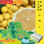 【レモン 5kg】  愛媛県・宇和島産  ご家庭用  送料無料