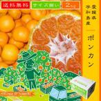 【ポンカン 2kg】 愛媛県・宇和島産 サイズ揃い 送料無料