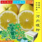 ●河内晩柑 かわちばんかん 3.5kg 愛媛県・宇和島産 ワケあり 訳あり みかん 送料無料