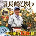 九州産 長崎びわ Lサイズ 12玉入 (500g)  × 4箱セット 長崎から産地直送 送料無料